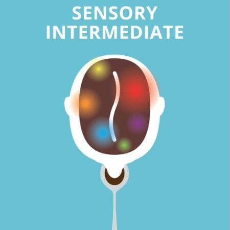 Sensory Intermediate Book