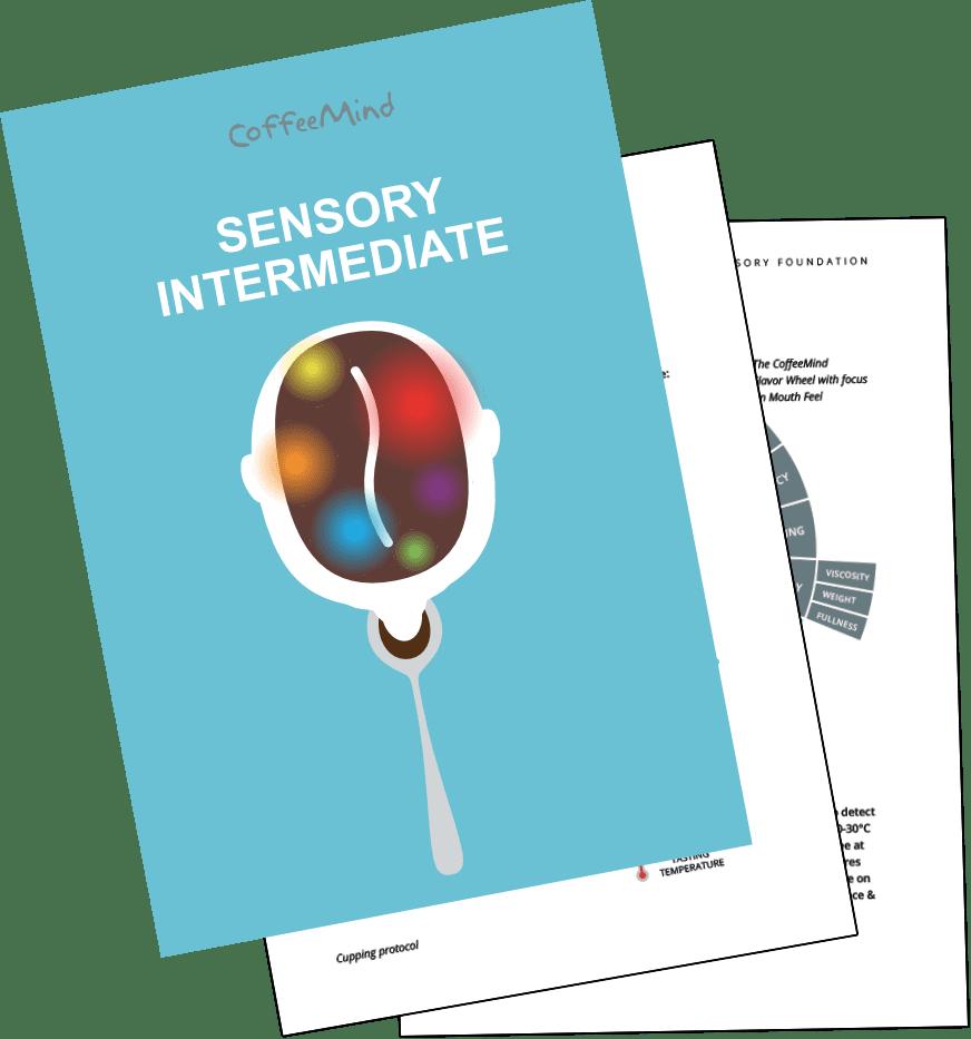 Sensory Intermediate Book
